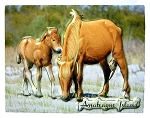 Assateague Island Virginia with Horses Highlight Fridge Magnet