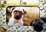 Pug Picture Frame Fridge Magnet