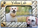 Yellow Lab Picture Frame Fridge Magnet