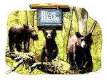 Blue Ridge Parkway North Carolina with Black Bears Artwood Fridge Magnet