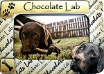 Chocolate Lab Picture Frame Fridge Magnet