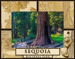 Sequoia National Park Laser Engraved Wood Picture Frame