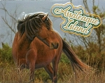 Assateaque Island With Horse Fridge Magnet
