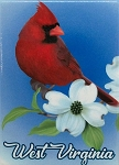 West Virginia with Cardinal Metal Fridge Magnet