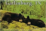Gatlinburg Tennessee with 2 Bear Cubs Sleeping Fridge Magnet