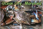Ocean City Maryland with Blue Crab Fridge Magnet