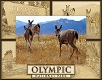 Olympic National Park Laser Engraved Wood Picture Frame