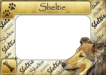 Sheltie Picture Frame Fridge Magnet