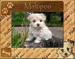 Maltipoo Laser Engraved Wood Picture Frame (5 x 7)