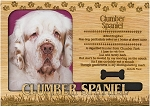 Clumber Spaniel Engraved Wood Picture Frame Magnet