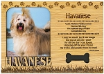 Havanese Engraved Wood Picture Frame Magnet