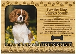 Cavalier King Charles Spaniel Engraved Wood Picture Frame Magnet