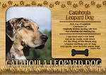 Catahoula Leopard Dog Laser Engraved Wood Picture Frame Magnet
