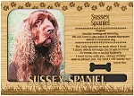 Sussex Spaniel Engraved Wood Picture Frame Magnet