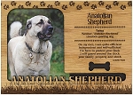 Anatolian Shepherd Engraved Wood Picture Frame Magnet