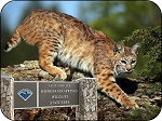 Homosassa Springs Wildlife State Park Florida with Bobcat Fridge Magnet
