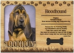 Bloodhound Engraved Wood Picture Frame Magnet