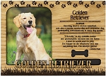 Golden Retriever Engraved Wood Picture Frame Magnet