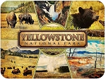 Yellowstone National Park Montage Fridge Magnet