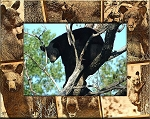 Black Bear Laser Engraved Wood Picture Frame