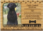 Curly Coated Retriever Engraved Wood Picture Frame Magnet