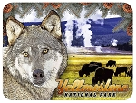 Yellowstone National Park with Wolf and Bison Fridge Magnet