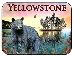 Yellowstone National Park Bear and Sunset Fridge Magnet