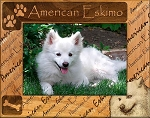 American Eskimo Laser Engraved Wood Picture Frame