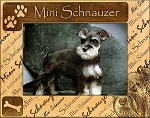 Mini Schnauzer Laser Engraved Wood Picture Frame