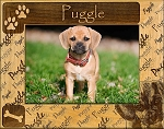 Puggle Laser Engraved Wood Picture Frame