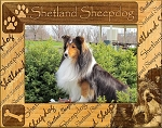 Shetland Sheepdog Laser Engraved Wood Picture Frame (5 x 7)