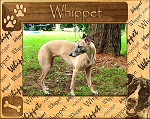 Whippet Laser Engraved Wood Picture Frame (5 x 7)