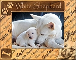 White Shepherd Laser Engraved Wood Picture Frame (5 x 7)