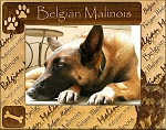 Belgian Malinois Laser Engraved Wood Picture Frame