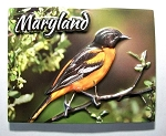 Maryland with Oriole Highlight Fridge Magnet