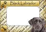 Black Lab Picture Frame Fridge Magnet