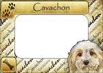 Cavachon Picture Frame Fridge Magnet