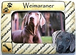 Weimaraner Picture Frame Fridge Magnet